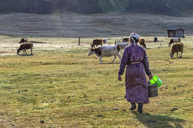 Работа и вакансии в Монголии для русских
